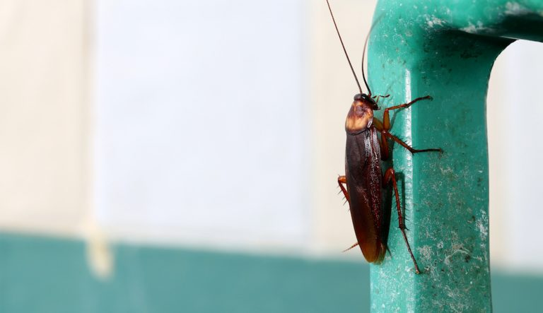 How to Eliminate Indoor Allergy Triggers from Pests