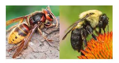 Bees & Wasp Control Lara