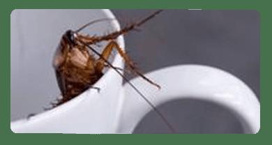 Cockroach Control Lara