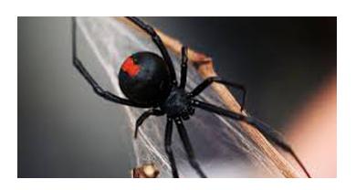 Spider Control Lara