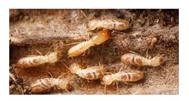 Termites Control Lara
